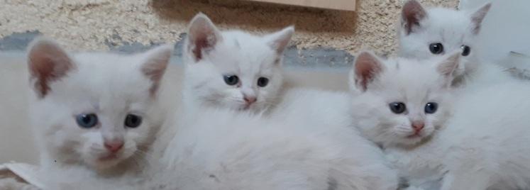 cicák_kicsi
